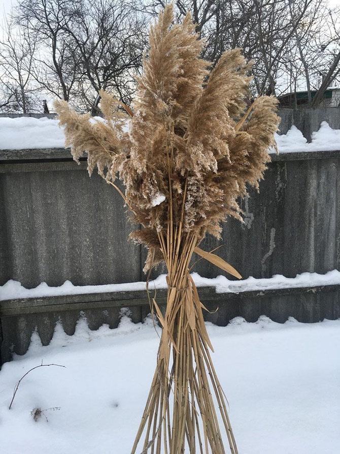 Сноп из пампасной травы