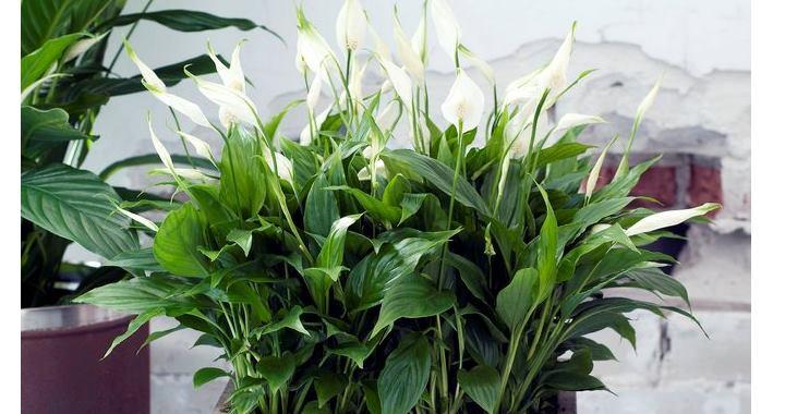 растение, которое может пережить длительную засуху
